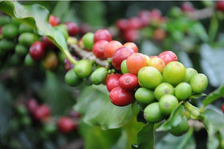 coffee-747604_1280-720×576